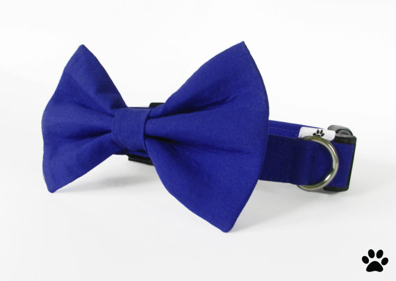 زفاف - Cobalt blue bow tie and collar - cat and dog bow tie collar set