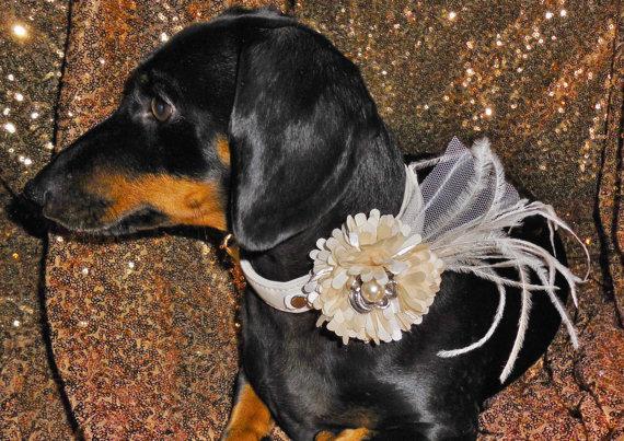زفاف - IVORY Satin Pom Flower Veil and White or Black  Dog Collar for Wedding
