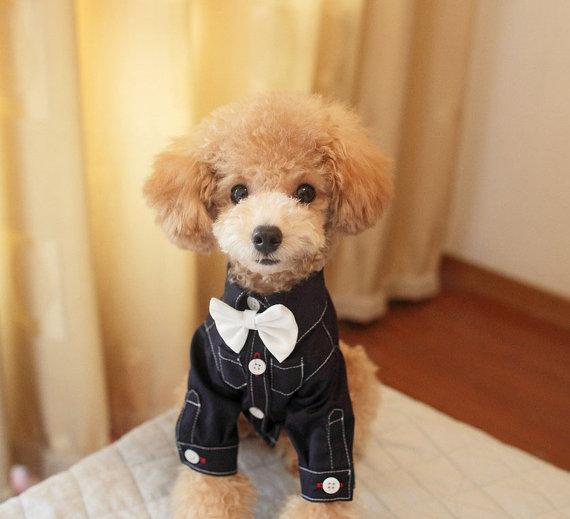 Free Shipping Teddy Pomeranian Dog Clothes Prince Pet Dog Shirt