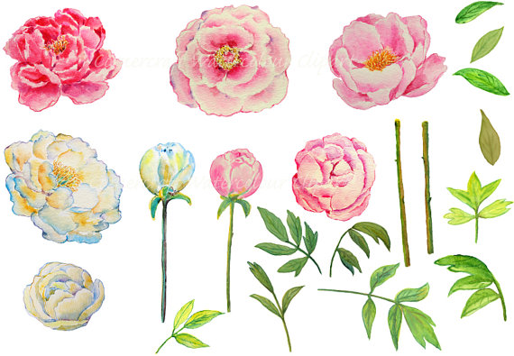 Hochzeit - Wedding clipart - watercolor peony pink and yellow printable instant download scrapbook  for greeting cards wedding invitations