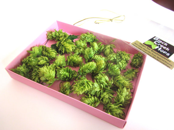 Mariage - D I Y - Boutonniere Hops for Weddings - 40 Dried Hops Flowers with Natural stems - Purchase Direct from the Farm
