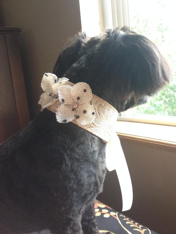 Свадьба - DOG FLOWER COLLAR - Burlap w white lace,pearls burlap flowers,Pet Wedding,Ties on, Pet Flower Dog Wedding, Pet Corsage, Dog flower , Dog Bow
