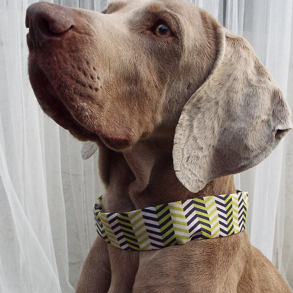 Свадьба - Collar Covers - Navy Blue and Lime Green Chevron Print - Inexpensive way to customize your pets collar for the holidays or just for fun!