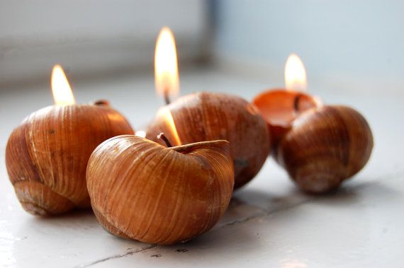 Wedding - Snails Shell Candles Handmade Eco-friendly Reusable Candles - Choose Your Scent - Set Of 6
