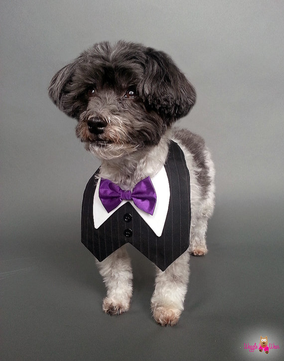 زفاف - Black Pin Striped Dog Tux, Dog Wedding Tuxedo Vest with Bow Tie Color of Your Choice