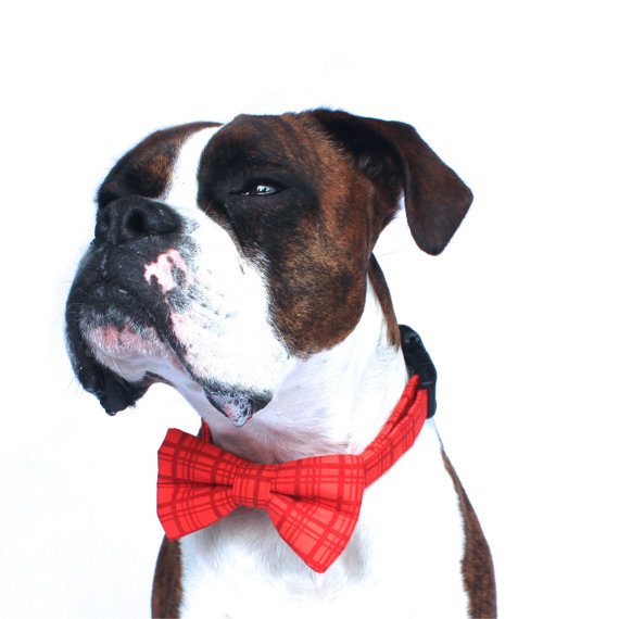 زفاف - Dog Bow Tie, Nautical Dog Bow Tie, Plaid Bow Tie, Doggie Bow Tie