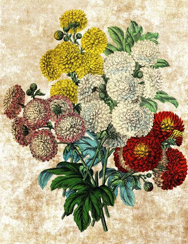 Mariage - zinnia flowers bouquet png clip art digital image download graphics images printable nature flowers