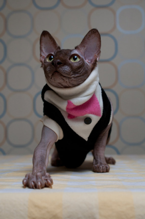 Свадьба - Formal PurrWear Couture for Sphynx, Cornish Rex, Devon Rex and all short haired cats.