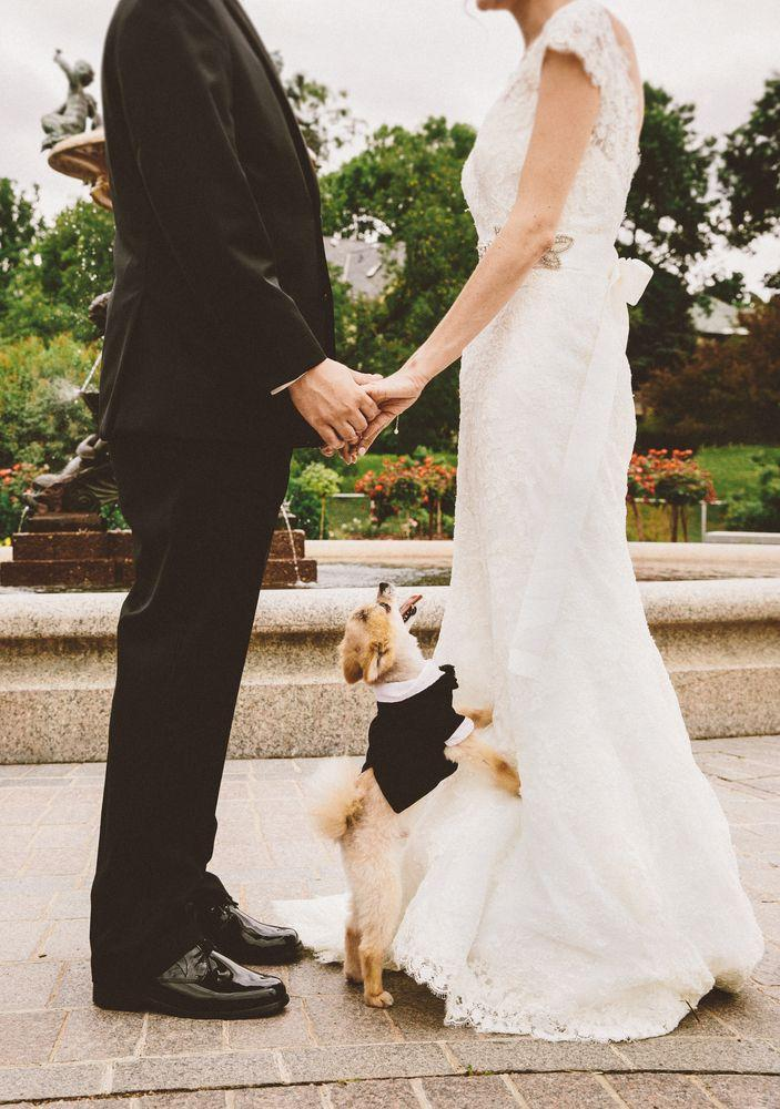 Свадьба - 20 Photos Of Pets At Weddings That Are Almost Too Cute For Words