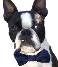 Свадьба - Formal Wedding Dog or Cat Bow Tie All Sizes