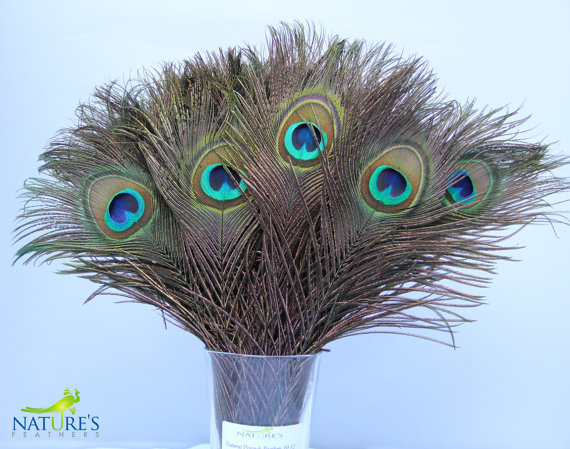 Wedding - 100pcs Real, Natural Peacock Feathers about 10-12 Inches High Quality