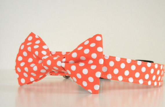 Свадьба - Orange Polka Dot Bow Tie Dog Collar Halloween Collar Wedding Accessories Made to Order