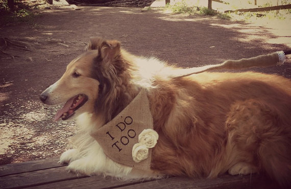 Свадьба - I Do Too Girl Dog Collar Bandana Rustic Natural Burlap with Flowers for Engagement Wedding Photo Prop