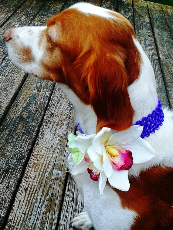 Свадьба - DOG FLOWER COLLAR-Pet Wedding, White Orchids, Green Hydrangea, Strech Fabric, Pet Flower, Dog Wedding, Pet Corsage, Dog flower clip, Dog Bow