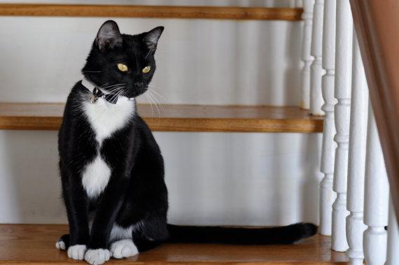 Свадьба - Wedding Cat Collar Bow Tie Cat Collar with Rhinetones and bell   Wedding Cat  Breakaway Collar Custom Made