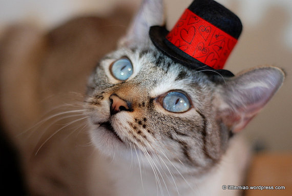 Свадьба - Wedding Cat Hat - Valentine's Day Hat - All You Need is Love and a Kitty