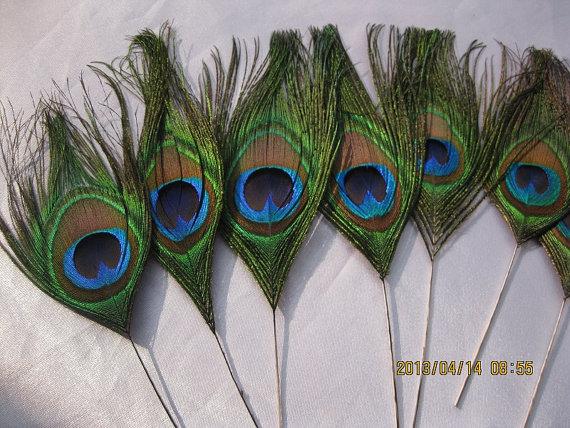 "Hochzeit - 100pcs/lot 8-10"" L Peacock eye  feathers  for Wedding invitation Bridal Bouquet Table Centerpiece DIY scrapbook or hairpiece"
