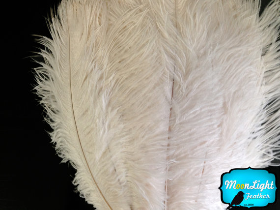 """Свадьба - Large ostrich plumes, 10 Pieces - 17-19"""" OFF WHITE Ostrich Plumes Dyed Drabs : 1408"""