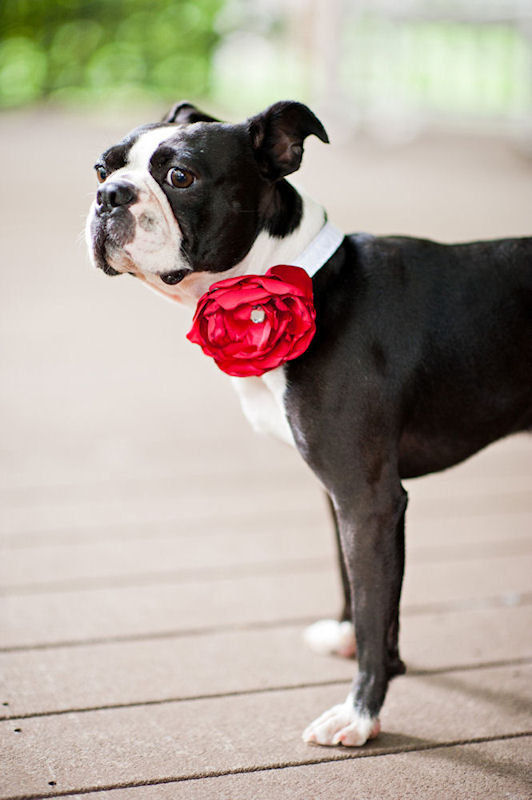 Свадьба - Satin Dog Collar Flowers - Wedding Accessories for Pets