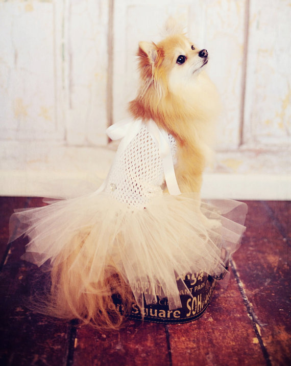 Свадьба - Dog TuTu wedding dress for toy breeds- Hair bow included