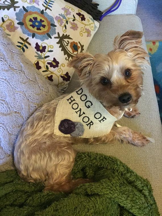 Свадьба - Dog Bandana Dog of Honor Wedding Collar Girl Flowers