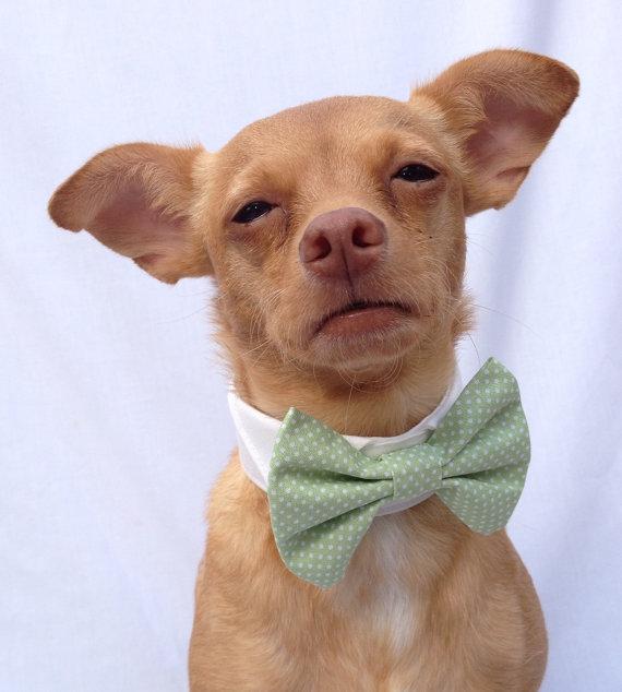 Свадьба - Mint Green Polka Dot Pet Bow Tie and Collar