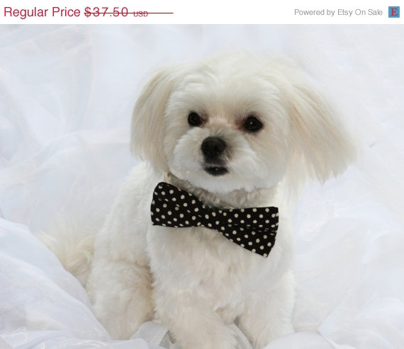 Brown Dog Bow Tie Chic Pet Wedding Accessories Lovers Birthday Gift