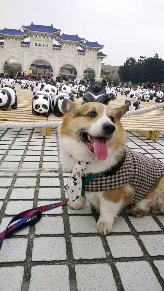زفاف - Dog necktie Panda print necktie Ready tied Four in hand knot panda and dot neck tie Pet wedding party birthday halloween collar accessory