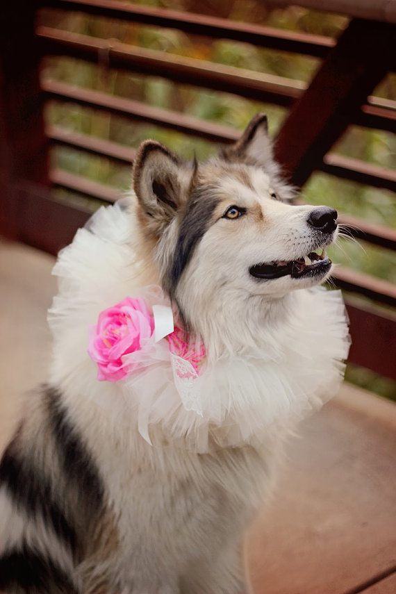 Свадьба - Wedding Dog Collar...Pet Collar...Pet Tutu...Wedding Tutu...Flower Girl Tutu
