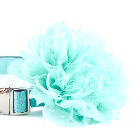 Свадьба - Aqua Shabby Chic Collar Flower - Light Aqua Robins Egg Blue Turquoise Detachable Dog Collar Flower for Weddings