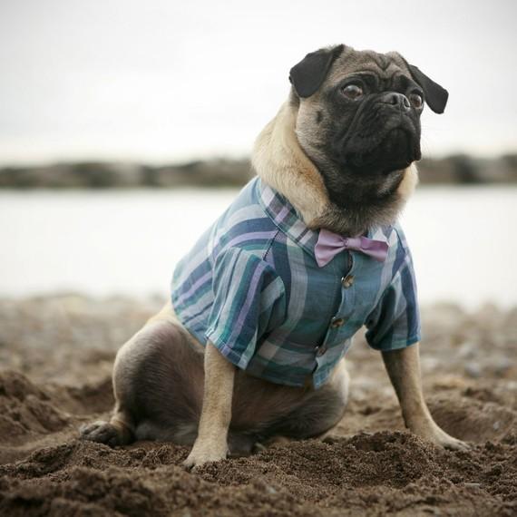 زفاف - The Arbour Dog Shirt (bow tie sold separately)