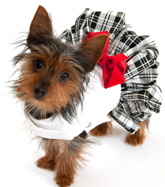 Свадьба - Dog Dress with Plaid Taffeta Skirt