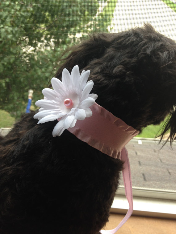 Свадьба - DOG FLOWER COLLAR -  Pink wide ribbon white flower,Pet Wedding,Ties on, Pet Flower, Dog Wedding, Pet Corsage, Dog flower , Dog Bow