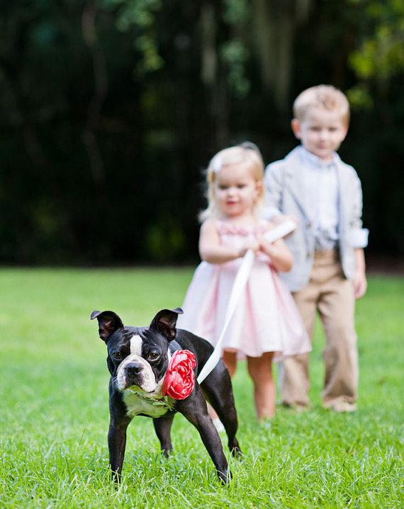 زفاف - Dog Collar Flower - Coral Satin - Dog Wedding Accessory