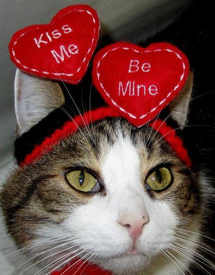 Свадьба - FLOATING HEARTS - WEDDING or Valentine Cat or Dog hat - Humorous - 2 to 20 lb pets-made to order
