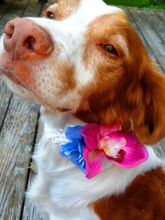 Mariage - DOG FLOWER COLLAR - Pet Wedding, Pink Orchid. Blue Hydrangea, Stretch collar, Pet Flower, Dog Wedding, Pet Corsage, Dog flower clip, Dog Bow