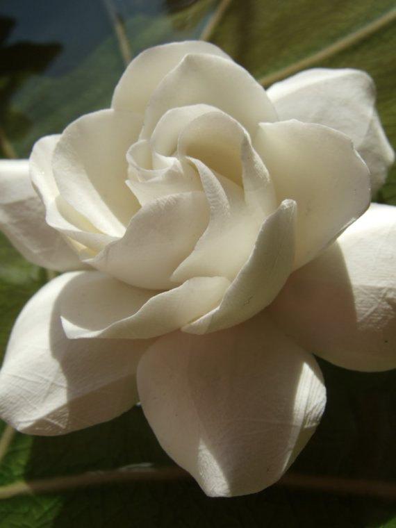 Свадьба - Gardenia Hair Flower For Weddings, Large Size