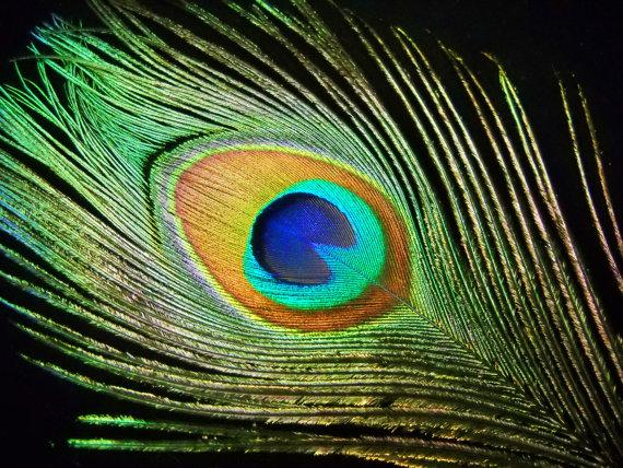 """Mariage - Multipack 34-40"""" peacock feathers big eyes plumes natural green eyes and stalks"""