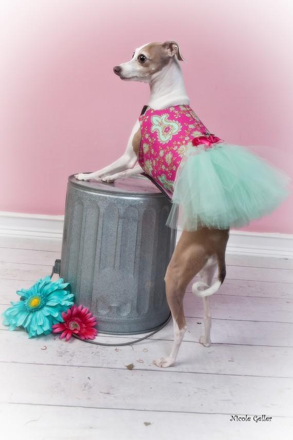 Mariage - Dog Dress Tutu Harness - Pink Paisley