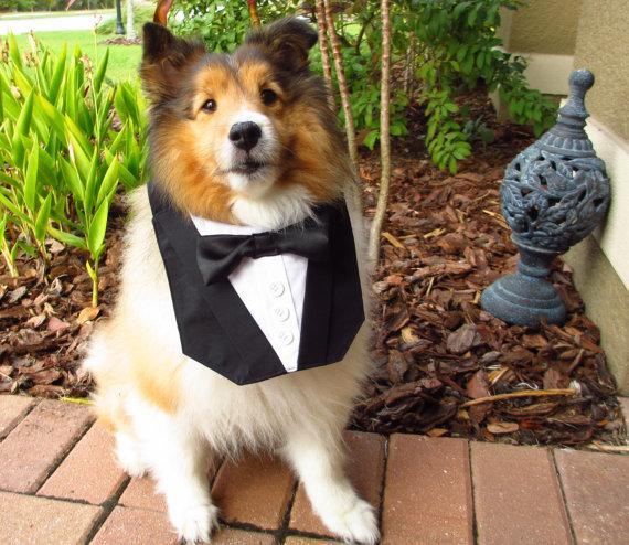 Свадьба - Dog Tuxedo Basic Black Bow TIe Bandana Vest Wedding Tux