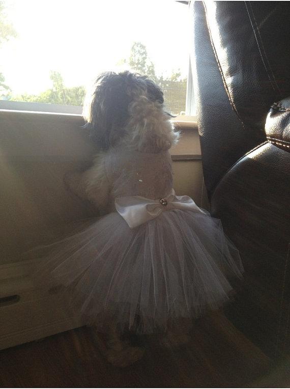 Свадьба - Dog Wedding Dress