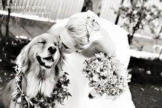 زفاف - (Dogs At Weddings)