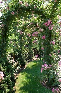 Mariage - Gardens:)