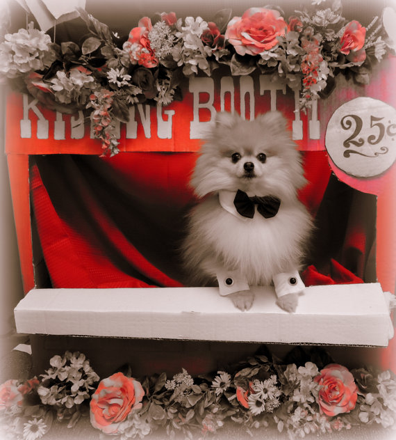 Hochzeit - Wedding or any Event  Bow Ties Handmade for  that Special Dog or Cat Bow tie cuff combo pet photo prop