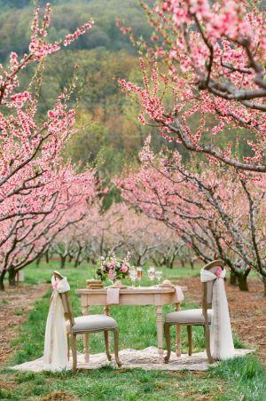 Wedding - Peach Blossom Wedding Inspiration