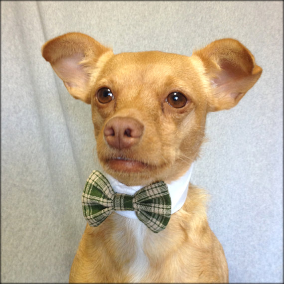 Wedding - Green Plaid Pet Bow Tie with a  White Shirt Collar