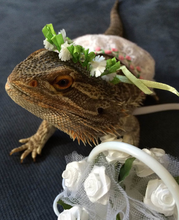 زفاف - Handmade Flower Girl Costume for Bearded Dragons