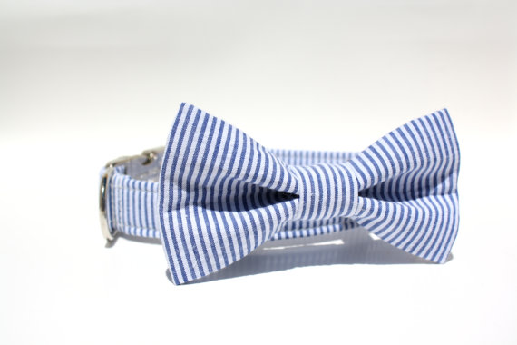 Свадьба - Blue and White Striped Seersucker Dog Collar with Metal Buckle and Bow Tie Set - Wedding Dog Collar / Seersucker Dog Collar