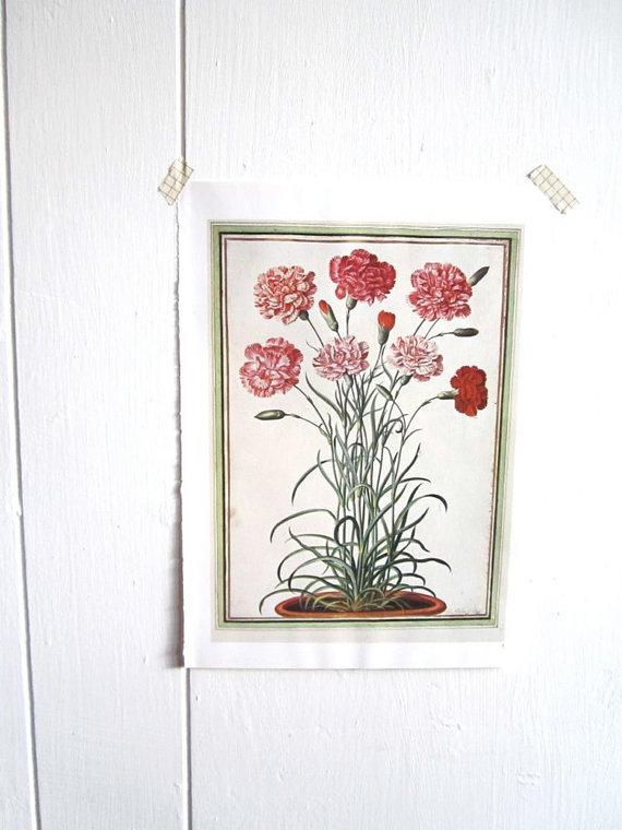 زفاف - Carnations, watercolor of carnations, flower print vintage botanical pink and red bouquet frameable botanical art print vintage book