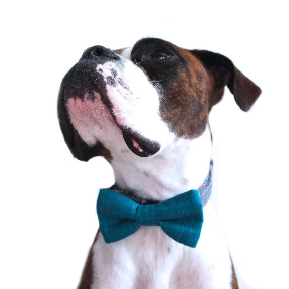 زفاف - Dog Bow Tie, Teal Dog Bow Tie, Doggie Bow Tie, Turquoise plaid Dog Bow Tie